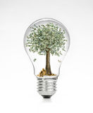 Retro vintage light bulb with dollar and money tree on top on white background Stock Image
