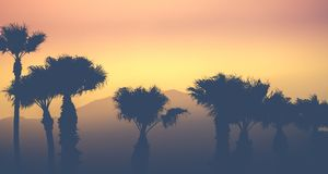Mountain Desert Palms Royalty Free Stock Image