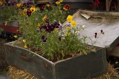 Retro walizka z kwiatami Fotografia Royalty Free