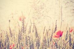 Retro- Weinlese filterte wilde Wiese mit Mohnblumenblumen bei Sonnenaufgang stockfoto