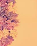 Retro- Weinlesefilter Autumn Leaves auf modernem Tendenzorangenhintergrund Stockfotografie