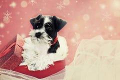 Retro- Welpe in einem Weihnachtsgeschenk Lizenzfreie Stockfotografie