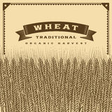 Retro wheat harvest card brown Royalty Free Stock Photos