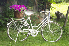 Retro white bicycle with basket flowers Royalty Free Stock Photo