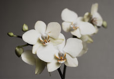 Retro witte orchideeën stock foto's