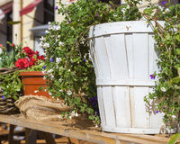 Retro wooden planter with flowers Stock Images