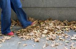 Retrocedendo as folhas Imagem de Stock Royalty Free