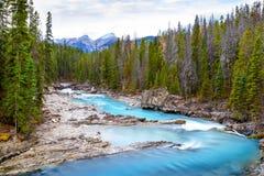 Retrocedendo o rio do cavalo em Yoho National Park, Canadá Foto de Stock Royalty Free
