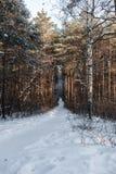 Retroceso en la trayectoria de la distancia en bosque en día de invierno claro Foto de archivo libre de regalías