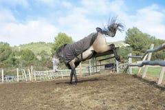 Retrocesso do cavalo Imagem de Stock