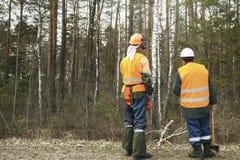 Retrovisione, boscaiolo due che esamina la foresta Immagine Stock