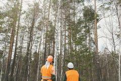 Retrovisione, boscaiolo due che esamina la foresta Immagini Stock