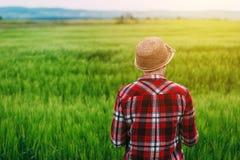 Retrovisione dell'agricoltore femminile che sta nel giacimento di grano Immagine Stock