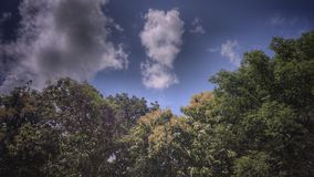 Retten Sie das Baum-Abwehr-Leben Stockfotografie