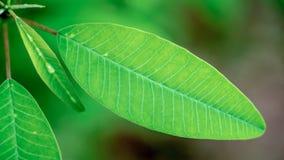 Retten Sie Welt mit einem grünen Baum lizenzfreie stockbilder
