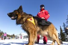 Retter des roten Kreuzes mit seinem Hund Stockfotografie