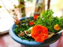 Rettichblumen lizenzfreies stockbild