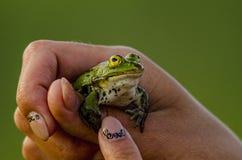 Rettung des Frosches Stockfotos