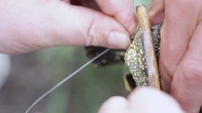 Rettungs-Flussschildkröte stock footage