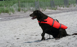 Rettungs-Hund Stockfotografie