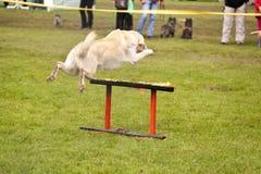 Rettungshund-Geschwader Lizenzfreie Stockfotos