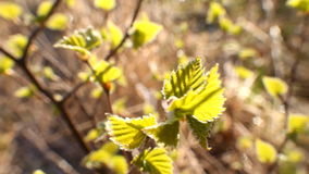 Return spring cold weather: frost on green leaf stock video