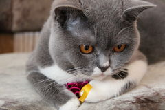 Returnerar djura djur för katter husdjursikt Arkivbild