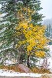Reunión amarilla y verde de los árboles Foto de archivo libre de regalías