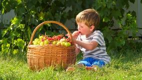 Reunión de la cosecha Niño que come las uvas al aire libre almacen de video