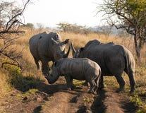 Reunión de la familia de rinoceronte Fotos de archivo