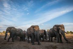 Reunión del elefante en un waterhole imágenes de archivo libres de regalías
