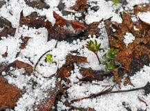 Reunión del invierno y de la primavera 1 Imágenes de archivo libres de regalías