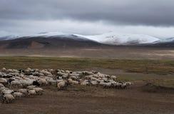 Reunión melancólica en Tíbet Foto de archivo