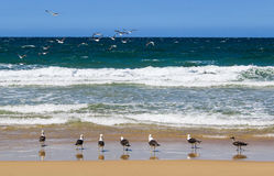 Reunion of seagulls in the beach looking to the sea Stock Photo