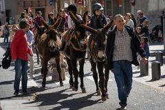 Reus, Spain. March 2019: Kids riding donkeys and mules around the city centre in The Tres Tombs festival cavalcade royalty free stock photography