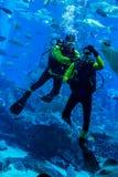 Reusachtig aquarium in Doubai. Duiker voedende vissen. Stock Foto