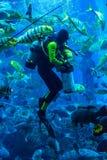 Reusachtig aquarium in Doubai. Duiker voedende vissen. Stock Afbeelding