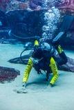 Reusachtig aquarium in Doubai. Duiker voedende vissen. Stock Afbeeldingen