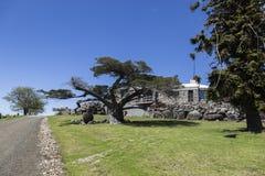 Reusachtig bomen en buitenhuis Bingie (dichtbij Morua) australië Royalty-vrije Stock Fotografie