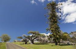 Reusachtig bomen en buitenhuis Bingie (dichtbij Morua) australië Royalty-vrije Stock Foto