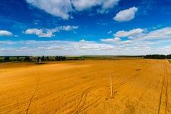 Reusachtig gebied van tarwe en blauwe hemel hierboven in het platteland stock afbeelding