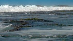 Reusachtig oceaangolvenbroodje op koraal reefes met groen zeewier stock video