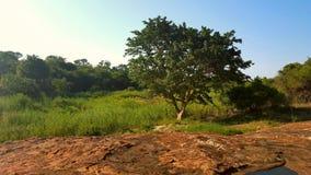 Reusachtige Afrikaanse keien dichtbij rivierbed Royalty-vrije Stock Afbeeldingen