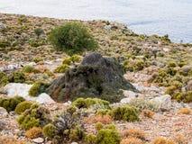 Reusachtige ant-hill Royalty-vrije Stock Afbeelding