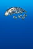 Reusachtige bel onderwater Stock Foto's