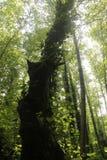 Reusachtige boom stock fotografie