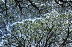 Reusachtige boomtakken Stock Afbeeldingen