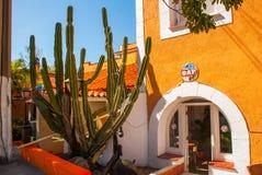 Reusachtige cactus dichtbij het gebouw Varadero cuba royalty-vrije stock afbeeldingen