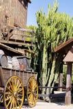 Reusachtige cactussen in Mexico Royalty-vrije Stock Afbeeldingen