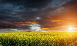 Reusachtige canola, koolzaad, verkrachtingsgebied vóór onweer met mooie wolken Stock Foto